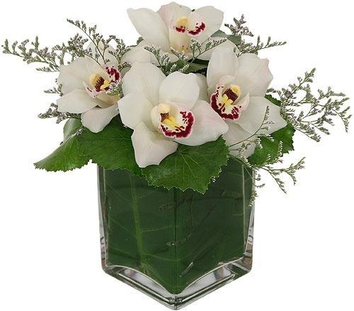 c-item-1663–aranzma—orchidea—beauty.jpg